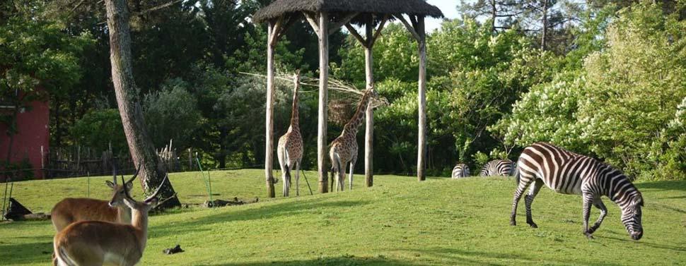 camping proche zoo de pessac